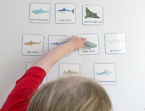 S is for Shark: Shark Matching & Memory Activities with Free Printable