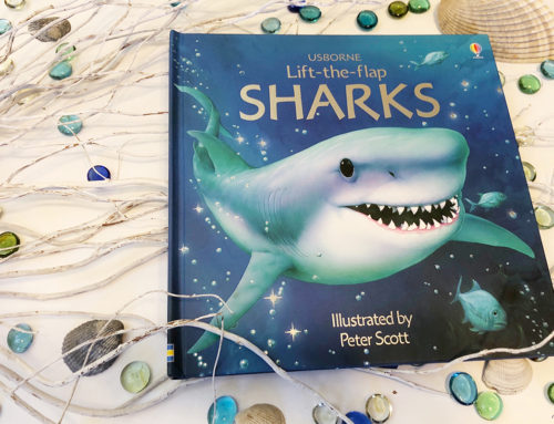 It's coming! It's coming! Get Ready for Meek Manor's Shark Activities!